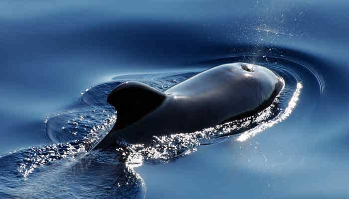 دانلود ۱٫۱ Blue Whale – بازی چالش انگیز نهنگ آبی برای اندروید