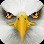 دانلود Ultimate Bird Simulator 1.3 - بازی شبیه سازی زندگی پرندگان اندروید